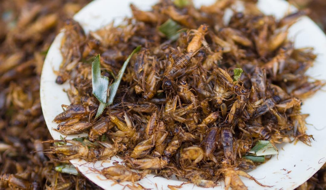 Insect feed could narrow the 'protein gap', says industry group